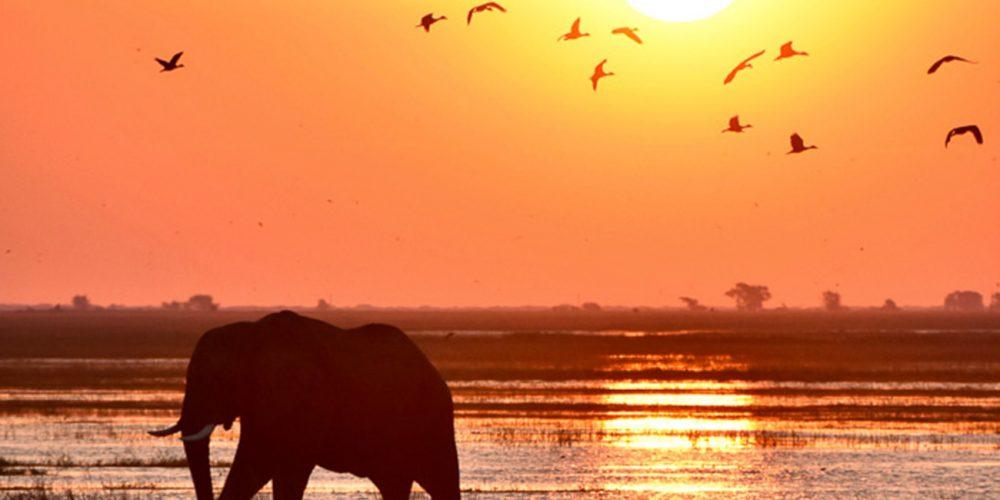 Elephant at sunset in Uganda.