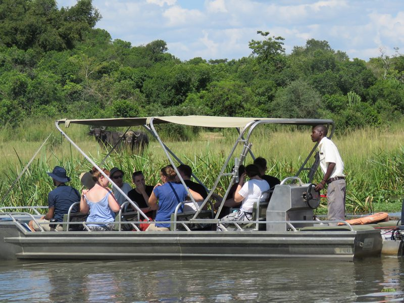 Boat at Murchison Falls National Park watching Buffaloes, Uganda