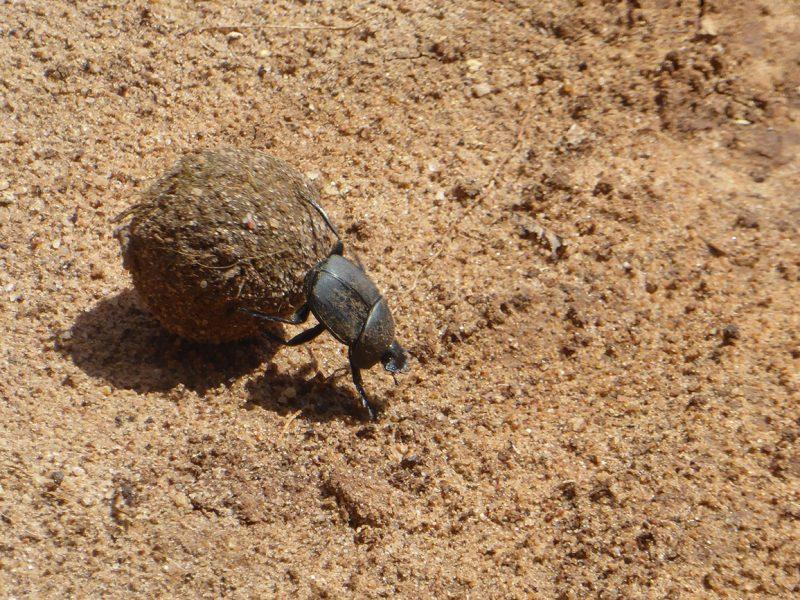 A Bug in Uganda.