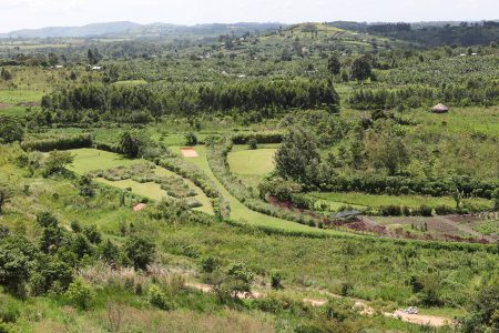 Scenic view of Kyaninga gardens, south western Uganda