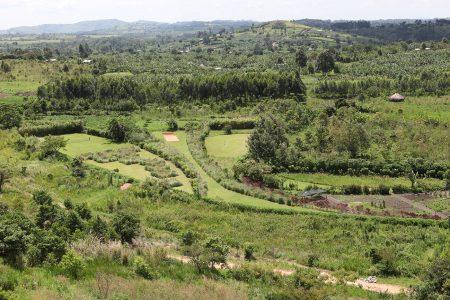 Gardens Kyaninga