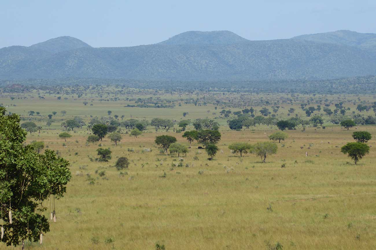 Scenic view of Kidepo Valley National Park, Uganda