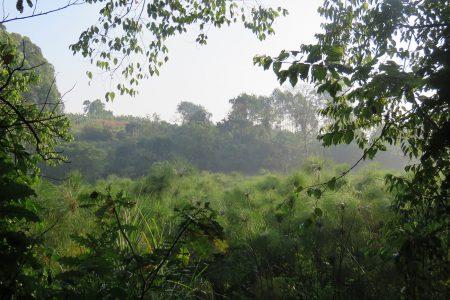 Swamp walk at Kluges Guest Farm.