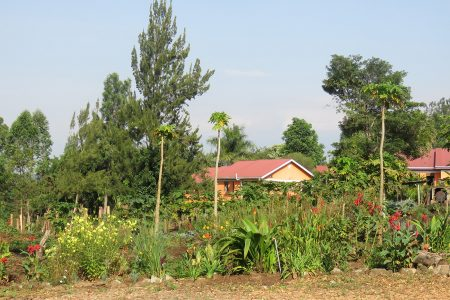 Kluges Guest Farm.