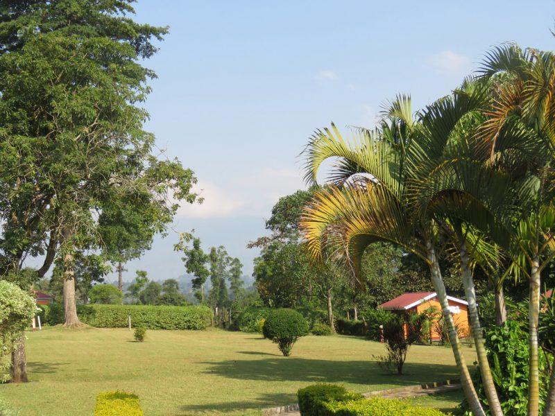Kluges Guest Farm gardens, Kibale.