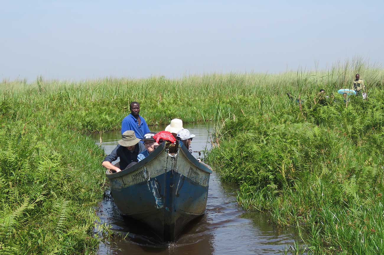 Mabamba swamp boat in search of the elusive shoebill and other bird species of Uganda