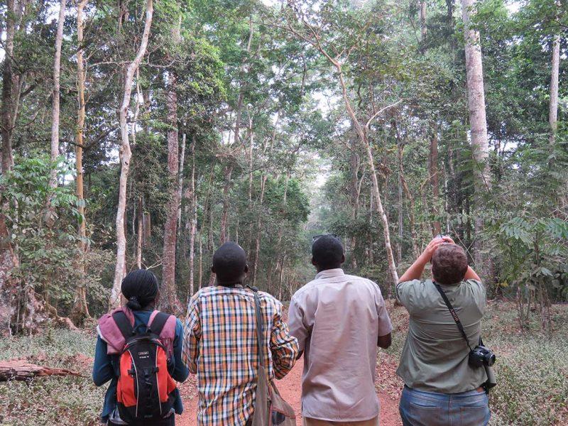 Birding at Royal Mile, Budongo Forest