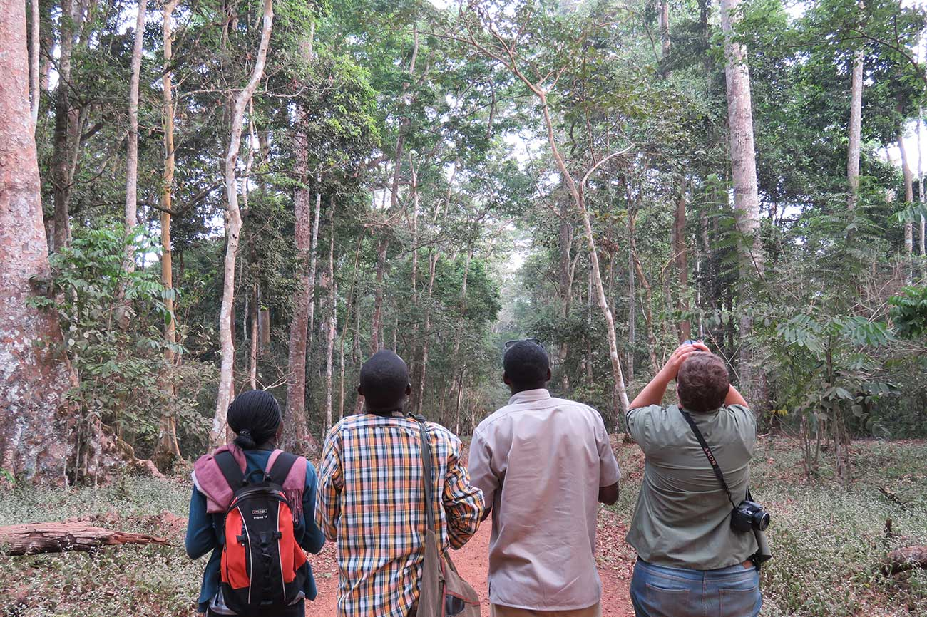 Birding at Royal Mile, Budongo Forest