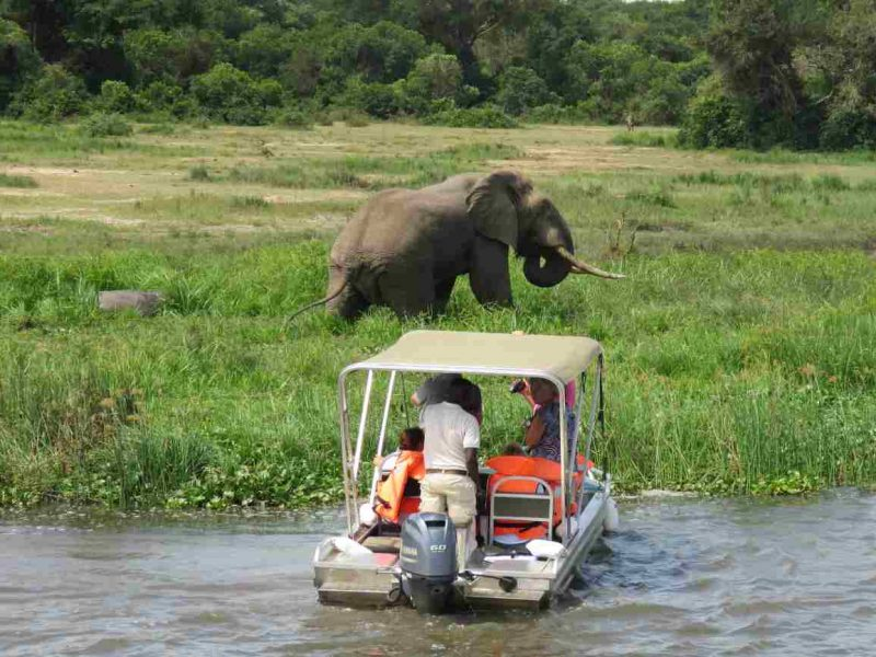 Elephant seen a boat cruise on river Nile in Murchison Falls national park