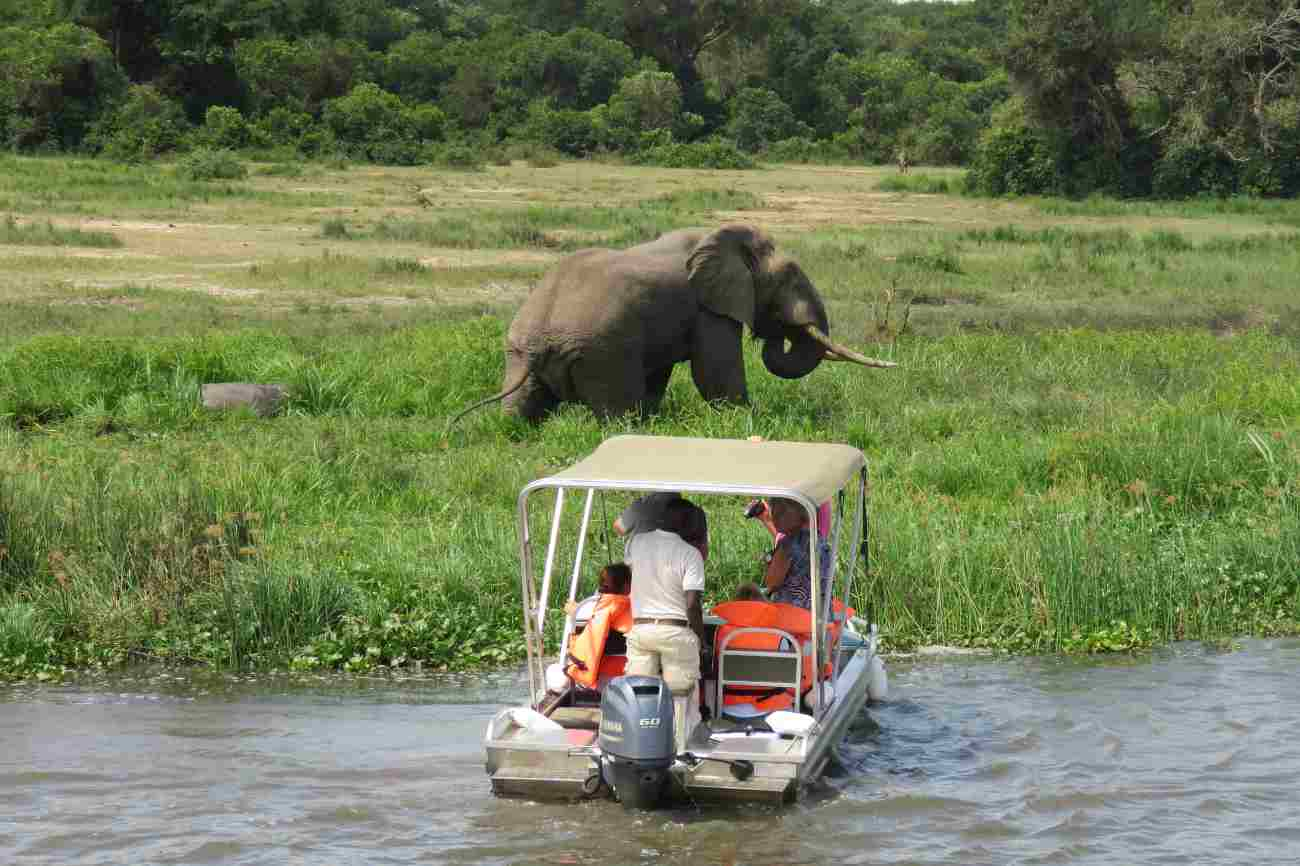 Elephant seen a boat cruise in Murchison Falls national park
