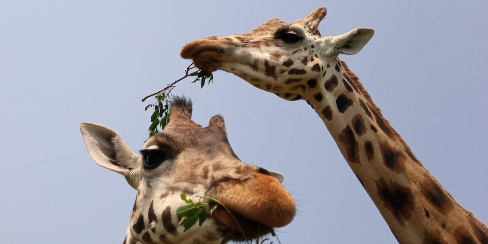 Behind the scene Uganda Wildlife Education Center